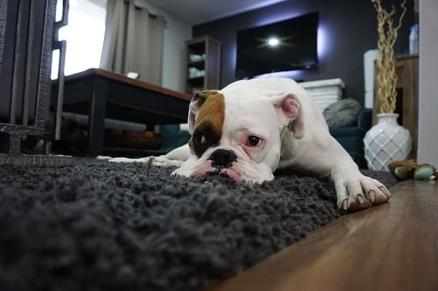 ifferent approaches to help your dog feel less aggravated.