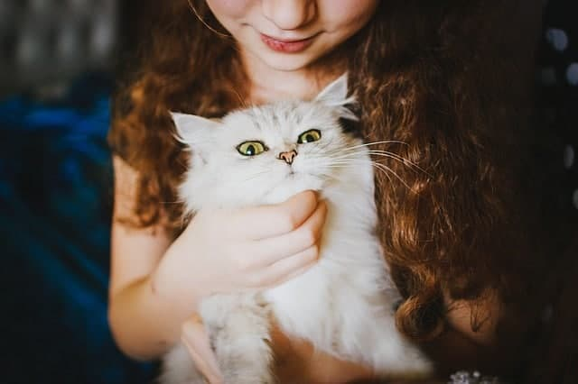 6 Surprising Things You are Subconsciously Learning from Your Cat - let's reach success blog